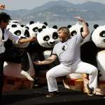 google-panda-fight