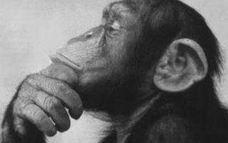 scimmia-seo